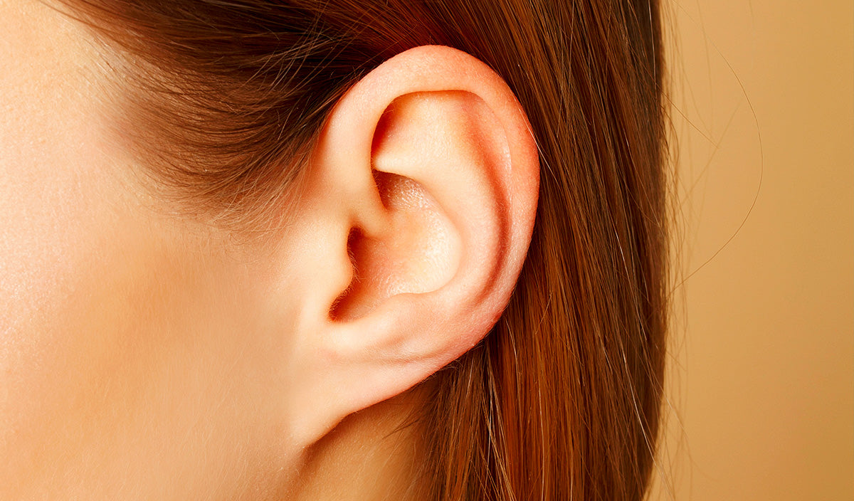 human-ear-anatomy