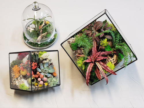 Geometric glass terrarium with succulents