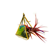 Load image into Gallery viewer, A small decorative lantern is filled with colorful moss and a preserved red air plant