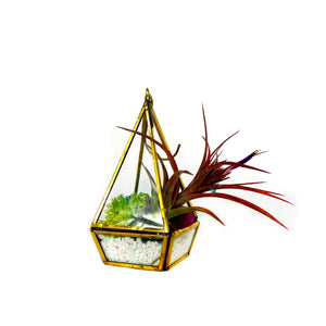 A small decorative lantern is filled with colorful moss and a preserved red air plant