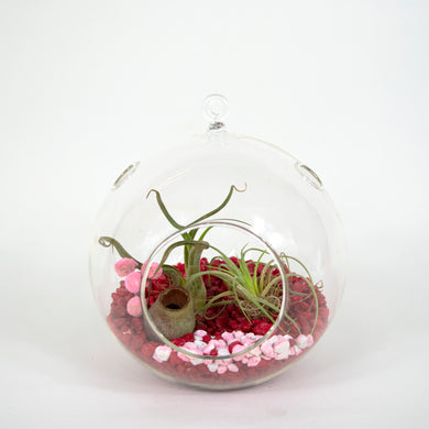 two air plants in glass ornament container