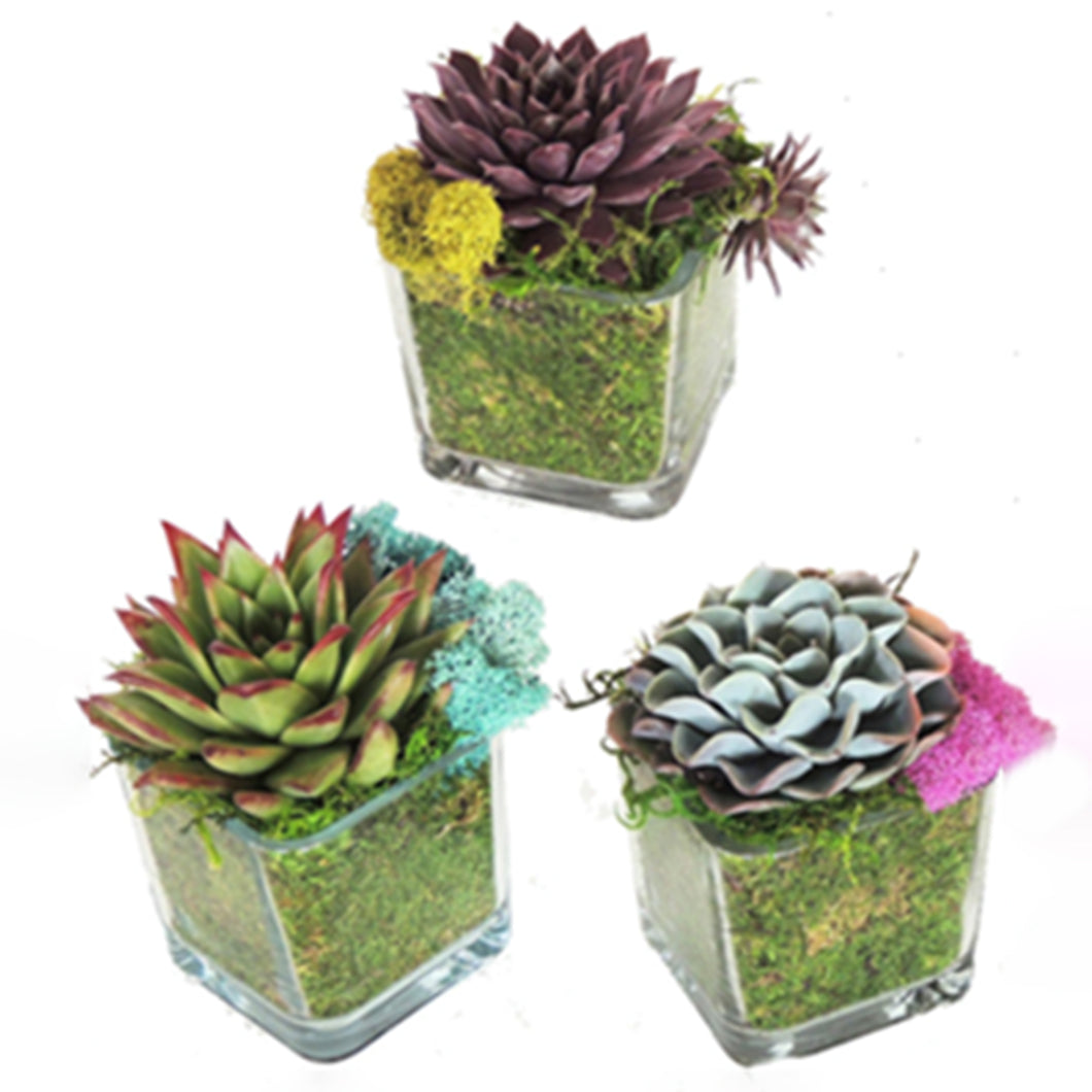 Three glass jars hold a variety of colorful succulents.  The jar is padded with moss