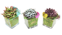 Load image into Gallery viewer, Three glass jars hold a variety of colorful succulents.  The jar is padded with moss