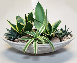 Assorted plants arranged in a bowl. Includes Sansevieria, Spider Plant