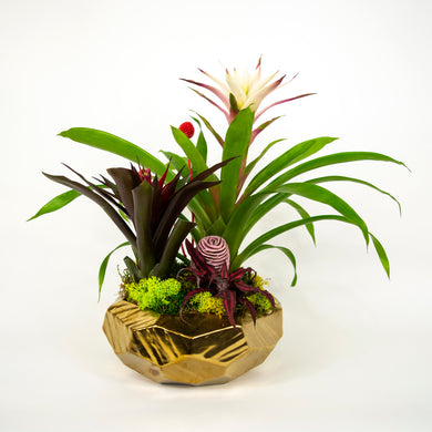 Double Bromeliad in Gold Vase