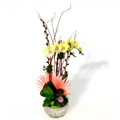 Yellow orchids with color pink and green leaves sit in a decorative pot against a white background