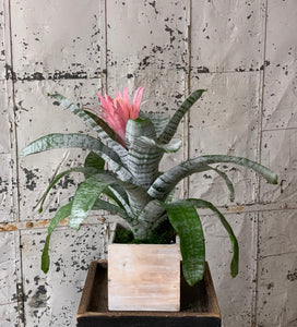 Exotic bromeliad with pink flower
