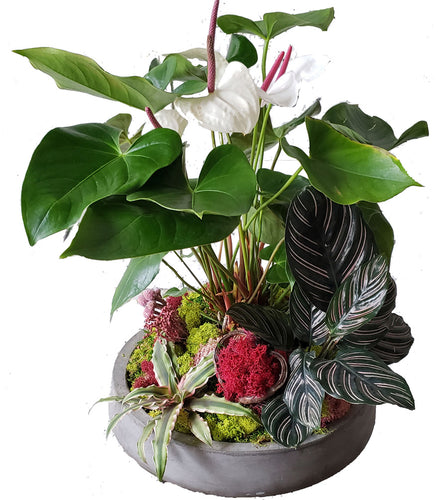 Anthurium arrangement with additional foliage in a concrete container. Foliage includes moss, calathea