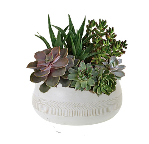 Assorted Succulent Arrangement in decorative bowl