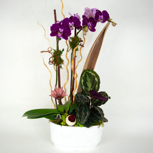 purple orchid arrangement with botanics