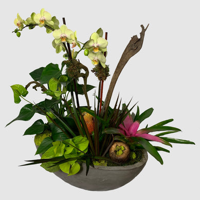 Orchid and Bromeliad floral arrangement in concrete bowl