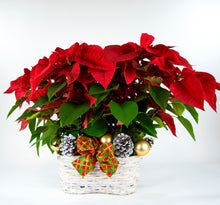 Load image into Gallery viewer, Basket of Poinsettias