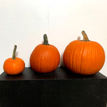 Load image into Gallery viewer, Pumpkins Large