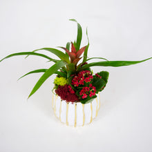 Load image into Gallery viewer, Small Red Bromeliad Arrangement