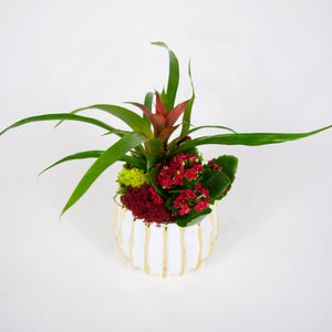 Small Red Bromeliad Arrangement