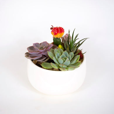 Variety of succulents in small white bowl