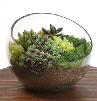Assorted succulent garden arrangement regular
