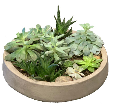 Mixed succulents in concrete planter