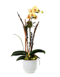 Yellow orchid plant with botanic accents