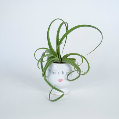 airplant in selfie container