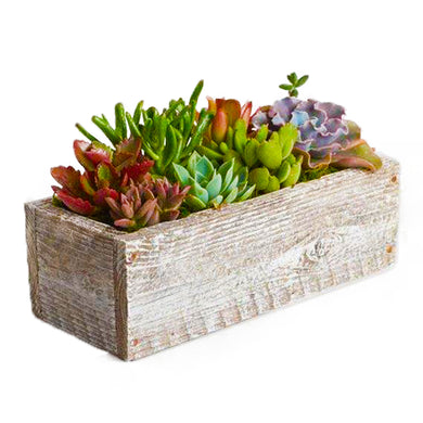 Box of mixed succulents