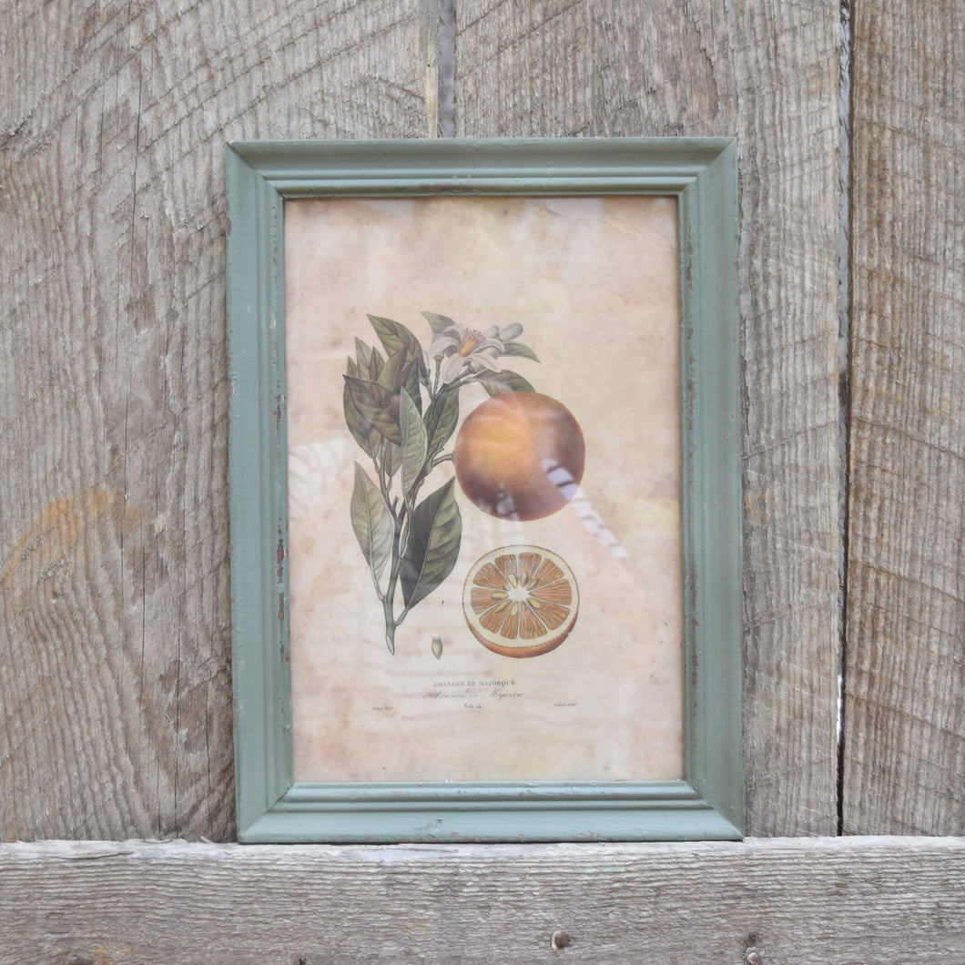 Citrus & Blossom Framed Prints