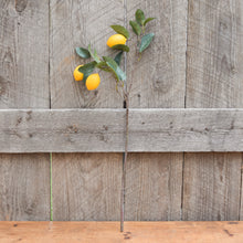 Load image into Gallery viewer, Large Lemon Stem