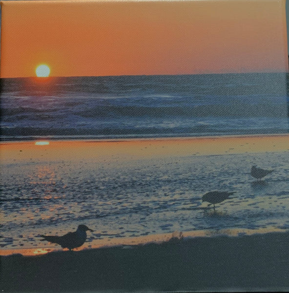 """Morning Seagull on Tybee"" Photographic Print by Jill Buckner"