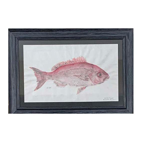 """Vermillion Snapper"""