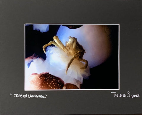 """Crab on Cannonball"" Photographic Print by Twisted Sisters"