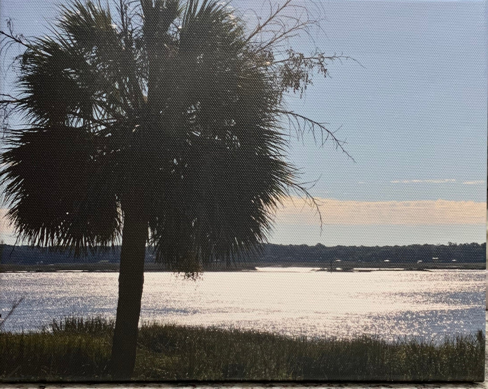 """Palm on Bay Watch"" Photographic Print by Jill Buckner"