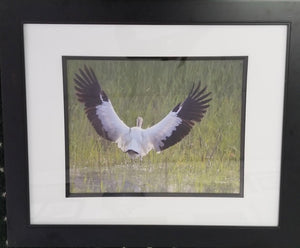"""Taking Flight"" Framed Photographic Print by Jill Buckner"