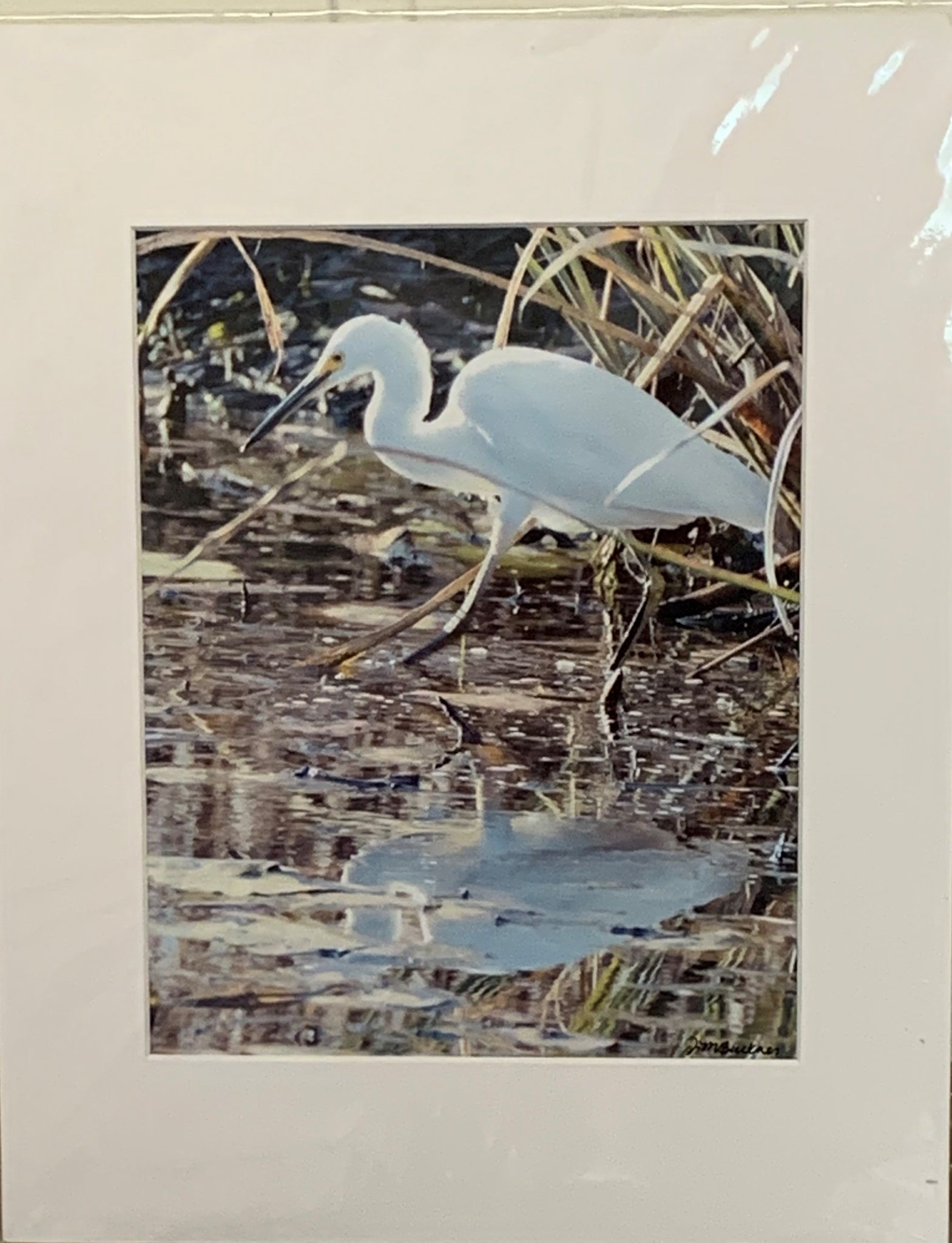 """Egret"" Matted Photographic Print by Jill Buckner"
