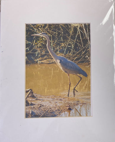 """Heron"" Matted Photographic Print by Jill Buckner"