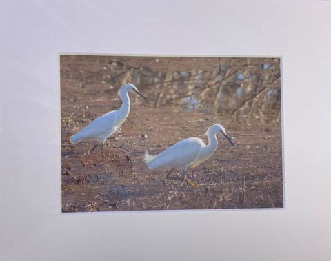 """Wood Storks"" Matted Photographic Print by Jill Buckner"