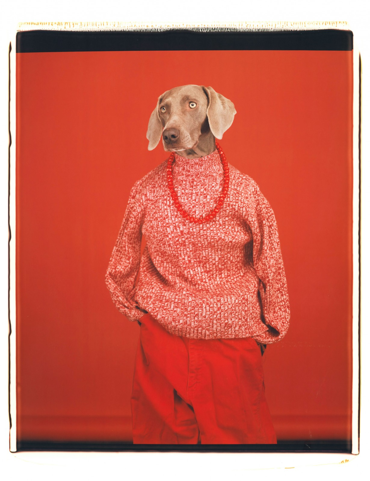 GALERIE INCOGNITO aime WILLIAM WEGMAN