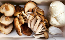 Load image into Gallery viewer, Mushroom Club Basket