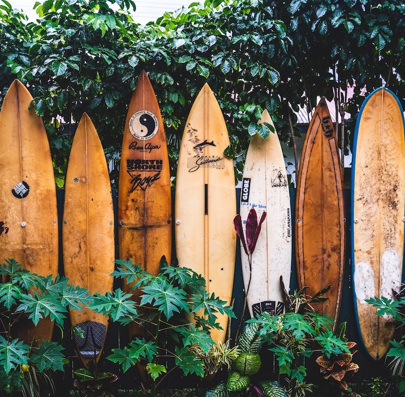 a bunch of wooden surf boards standing up against dark green ivy.