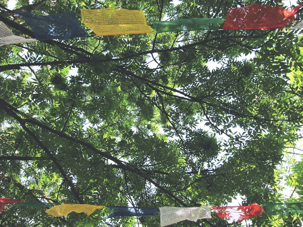 prayer flags hang in the canopy of lush green trees