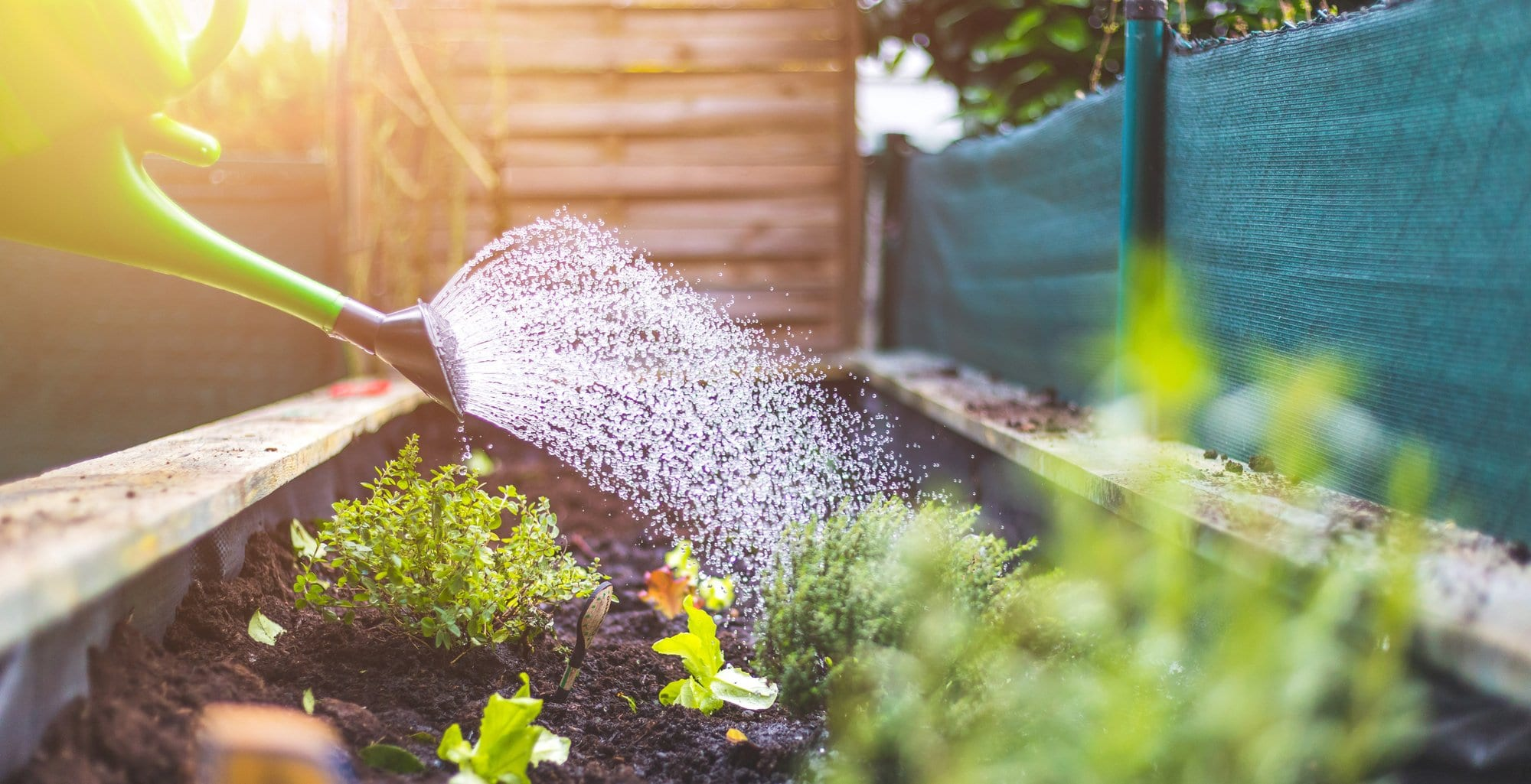 How Much Should You Be Watering Your Garden?