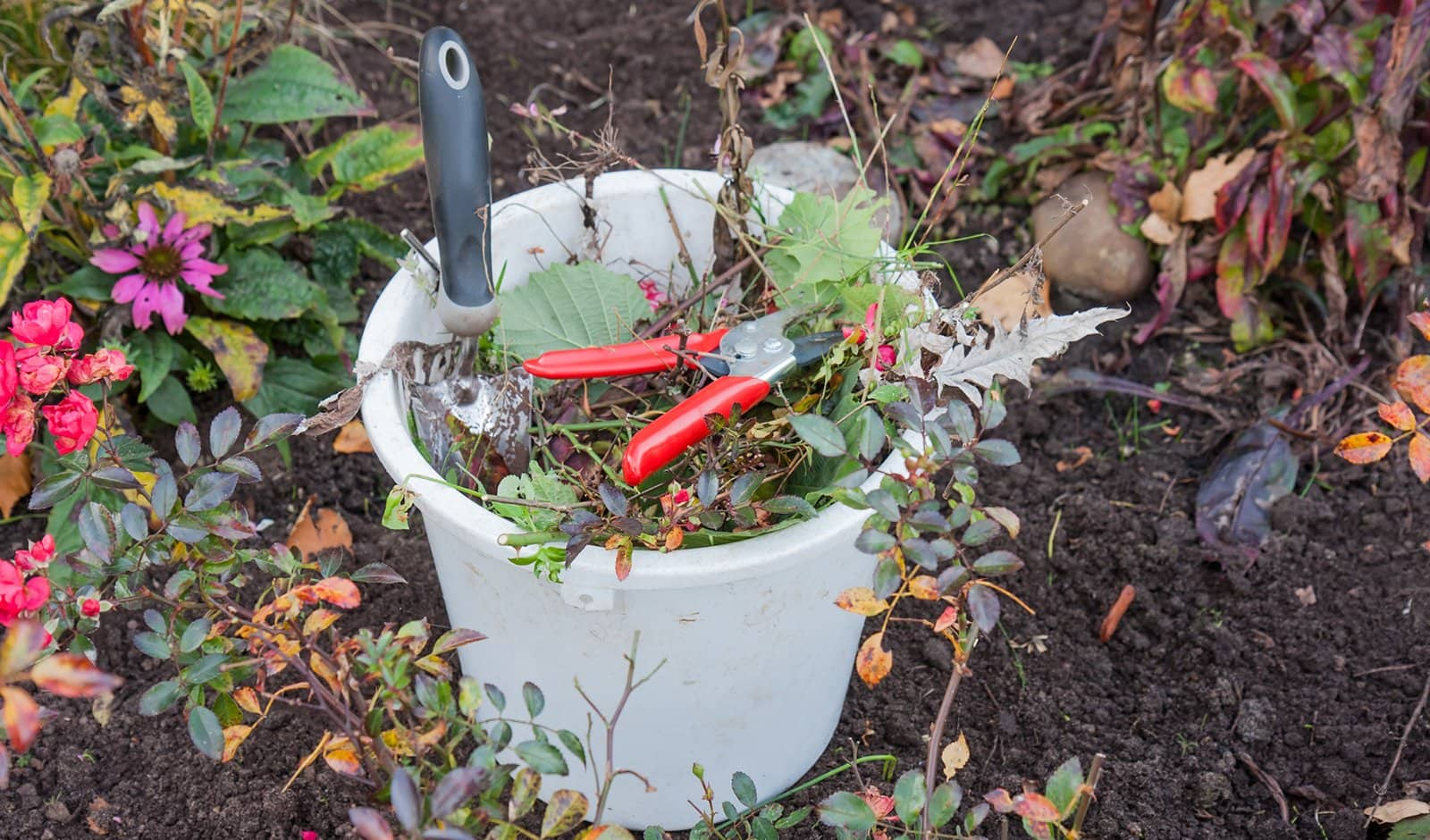 Fall Cleanup in Your Garden