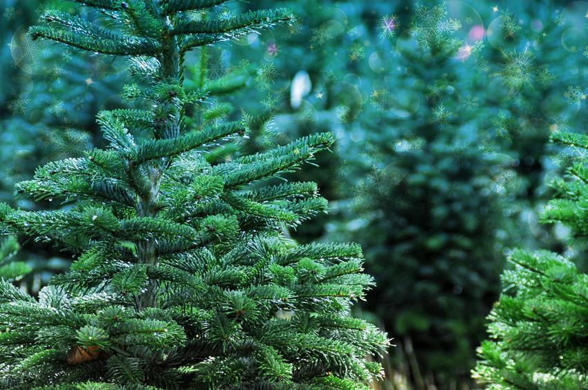 Tips to Keep Your Christmas Tree Fresh for Longer