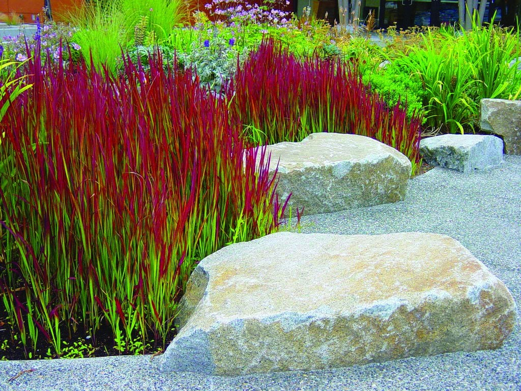 Red Ornamental Grasses in your garden.
