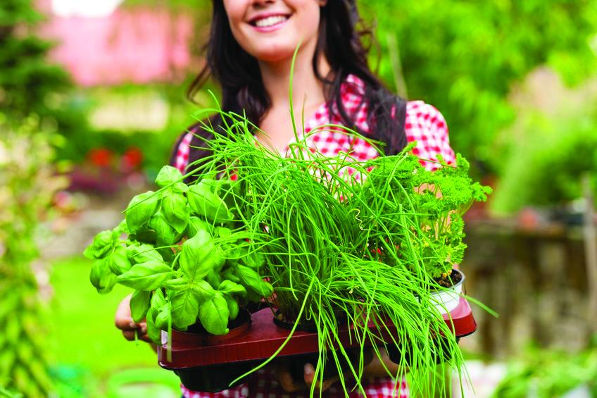 Herbs - A few tips and tricks to grow a successful herb garden