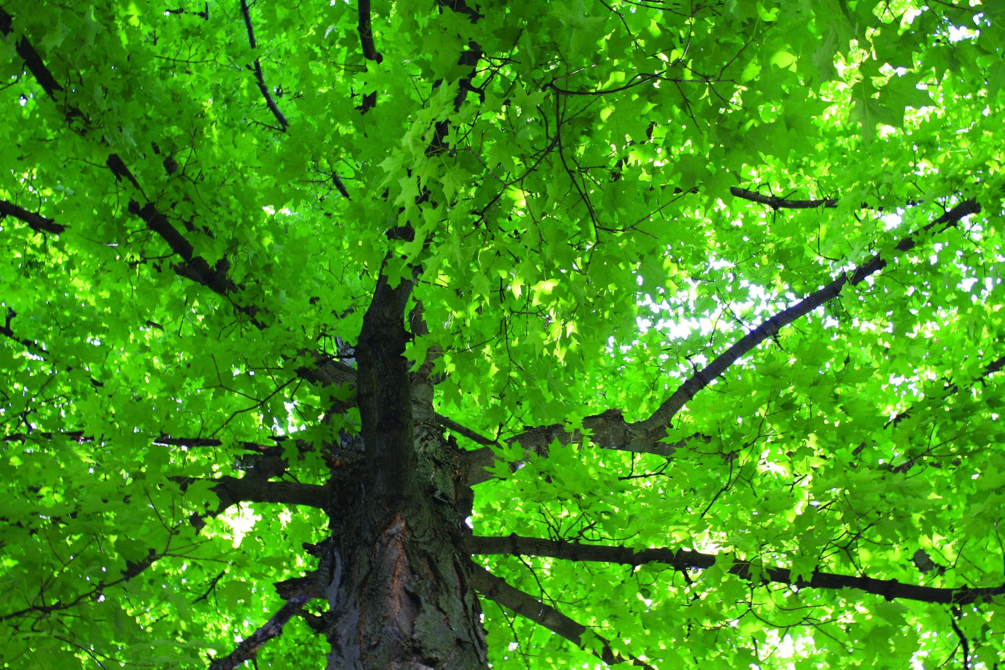 Why we think EVERYONE should plant a tree