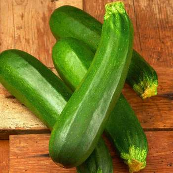 Zucchini Dark Green - Barrie's Garden Centre