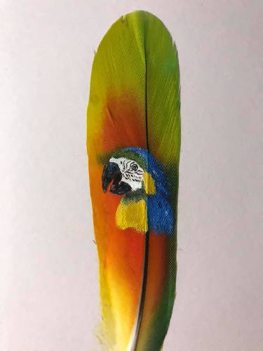 Parrot on a Parrot feather