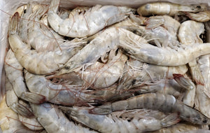 White Shrimp Heads on, Shell on 30-40 (4lb/Pack)