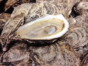 Salt Grass Point Oysters 100ct