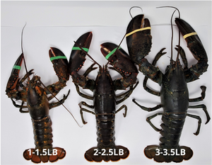 "Two claws of ""LIVE"" Lobster(2.25-2.5lb/pc) $47/pc"